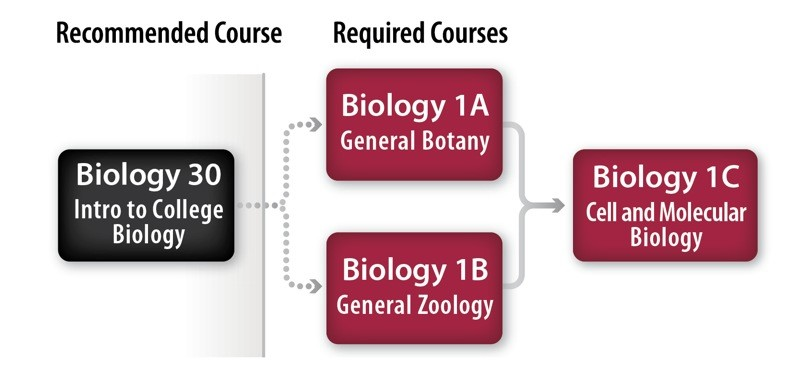 Biology Major and Pre-Professional Pathway